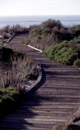 Boardwalk-2-web-size