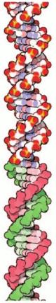 [DNA long]