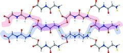 [Hydrogen-bonded dipeptide chains]