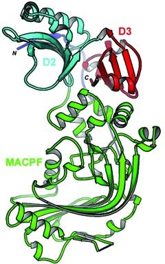 [MACPF protein]