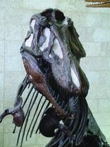 [T. rex]
