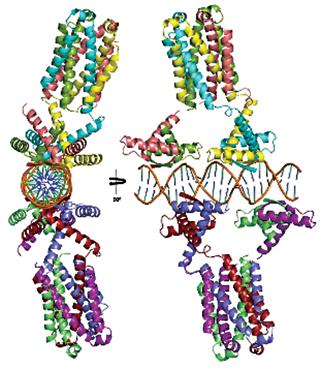 [TraM-DNA]