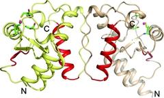 [ARFGAP molecules]