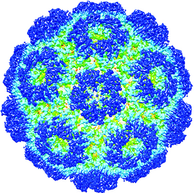 [Brome mosaic virus structure]