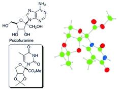[Nucleoside scheme]