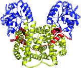 [Phosphogluconate complex]